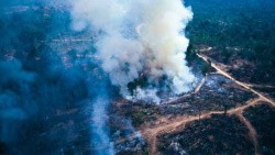 Incendio in Amazzonia: cause e conseguenze